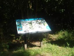 There is an information board just inside the entrance with a map and information about the wood.