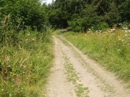 The main track into the wood runs down a gentle gradient but its surface is very uneven in places. Because of the ruts there are occasional cross gradients to be avoided.