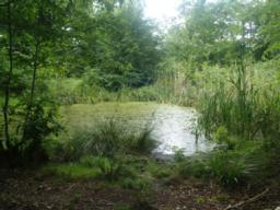 The is a small pond as you enter the woodland.