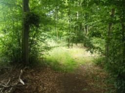 For most of the rest of the trail the path is earth trodden, uneven and narrow in places.
