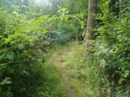 There may be overhanging branches or vegetation as you follow this path.