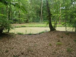 Another of the ponds that add to the diversity of the nature reserve.