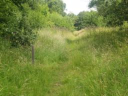 The path surface can be overgrown during the summer.