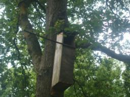 A nesting box for owls ....