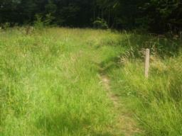 The path surface can be uneven and overgrown.