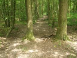 There may be tree roots and other trip obstacles along the path.