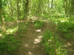 The path narrows in places because of the vegetaion.