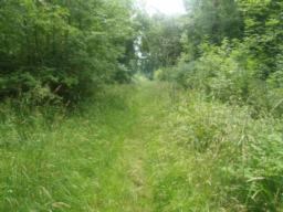 The overgrown path may hide some uneven ground and trip obstacles.