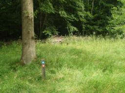 There is another bench about 15 metres into the grass next to the path.