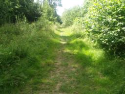 Although the path is wider it may be over grown and uneven under foot.