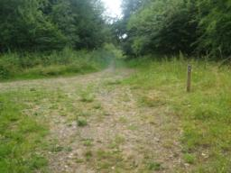 Turn left as you rejoin the main path through the reserve.