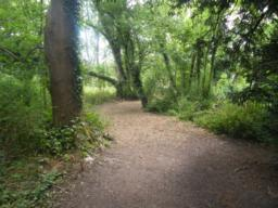 Path continues through wood for around 200 metres. Right turn towards Gobion Wood.