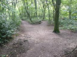 Firm path in woodland, three-way divergent paths. Route continues the left.