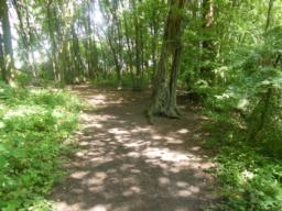 Good path continues through woodland for 30 metres.