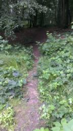 Turn right off path up a 1.6 (16.7%) gradient for 2 metres. Path is overgrown, narrowest point is 30cm.