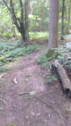 Path narrows round tree to one person width, tree roots protrude above surface. Slight bump in path at 1.8 (12.5%) gradient.