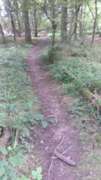 Path continues in this poor condition for 20 metres.