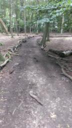 Path still hampered by occasional root growth and boggy ground, however, path width is 2.5 metres so all obstacles are easily negotiable.
