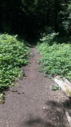 Path narrows to 0.5 metre due to plant growth and encroachment.