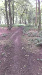 Path is generally clean, some small branches litter the way but no tree roots or major obstacles occur.