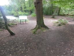Short slope to pond and information board at 1:9 (11.1%); path flanks tree; surface becomes hard again.
