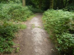 Path quality occasionally deteriorates and becomes uneven with camber of 1:20 (5%).