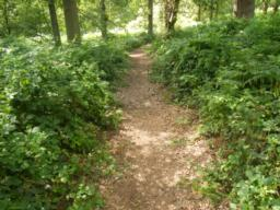 Path narrows to less than 1 metre wide. Accumulated leaf mould.