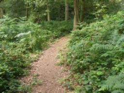 Path continues to rise through woods, gradient lessens to 1.8 (12.5%). Undergrowth often encroaches onto path.