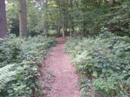 Path begins to level as route reaches the area where bottom woods were originally entered through kissing gate.