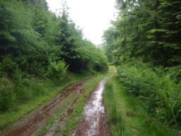 This is Long Combe where the circuit continues to follow the stream.