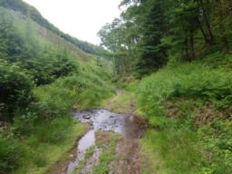 In several places, small streams cross the track making it quite muddy.  The steep hillside to the left has been recently replanted with oak.