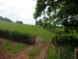 The line to be taken is along the edge of the fields with the hedge/fence on the right and through a field gate into a second field.