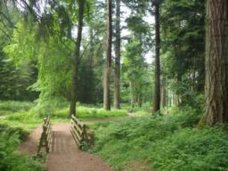 This is the top of the Tall Trees trail and a wheelchair friendly path leads to the tallest tree in England.
