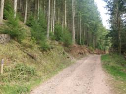 ...before joining Park Lane, one of the main tracks through the forest.