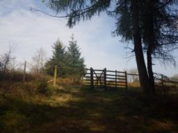 At the top of the plantation, there is a large gate through a deer fence into more open ground.