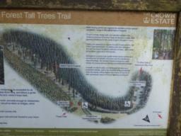 Just before a Blue Badge car park, there is an information board describing the Tall Trees Trail.