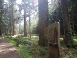This is a wheelchair friendly path which soon passes a device for measuring the height of the tallest tree in England.