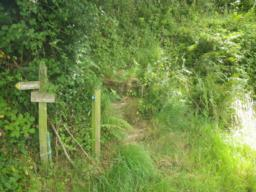 ... and leads to four steps which are between 0.2 and 0.3m high.  The path is narrow and quite overgrown.