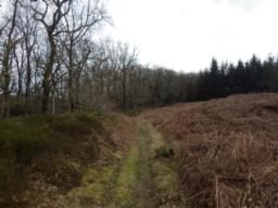 In another 100m or so, there is an Iron Age enclosure/hill fort to the right of the path.  This can be hard to see if the bracken is high.