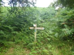 For the next 500m, the path is heavily overgrown with bracken.