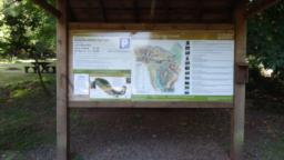 At the top of the car park, there is an information board with a map showing the trails through Dunster Forest.