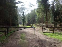 A wide forest track leaves the car park.  At the side of a locked gate, there is a gap which is 1.0m wide.