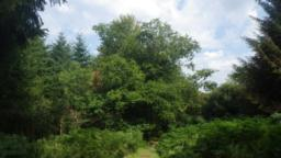 There is a mix of conifers and deciduous trees in this section with some fine  oak  trees to be seen.