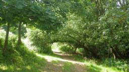 The path goes under a fallen tree and soon reaches another gate in the deer fence where the woodland is left behind.