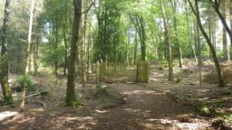 There is a large gate in a deer fence which encloses much of the old Dunster Deer Park.  It is possible to see red deer and Exmoor ponies in this enclosure.