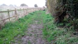 Muddy in places, especially after heavy or continual rain. Some ruts along the side of the path.