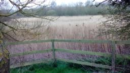 A gap in the hedge leads to a triangular viewing area that looks out over the reedbed.  Decline of 11.5 degrees/ 24.9% to fence.  From here you can see and hear sedge and reed warblers, whitethroats and reed buntings.  There is a bench with no back.