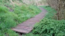 Look for the board walk at the end of the hedge where path bears to the left.  Mind the 7cm step onto boardwalk, it can be overgrown around it.  It is 60cm wide with gaps of 2cm between planks.  Chicken wire covers the boardwalk. Decline of 4.5 degrees/ 7.7%.  The board walk has several changes bearing left.  There is a handrail on the left hand side. This path leads to a bird hide which is 53m away.