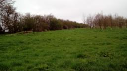Bench is 46m uphill through long grass, incline of 7.4 degrees/12.6%  optional to the right, near the owl box.