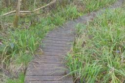 There is a small step onto the boardwalk which is 76cm wide with gaps up to 5 1/2cm.  The whole boardwalk is covered in chicken wire, there are no handrails.  There are several bends to the left and right.  At one end of the boardwalk, there are 2 steps, the first is 16cm high, the second step is lower.  There is an uphill gradient of 4 degrees/7.5%.